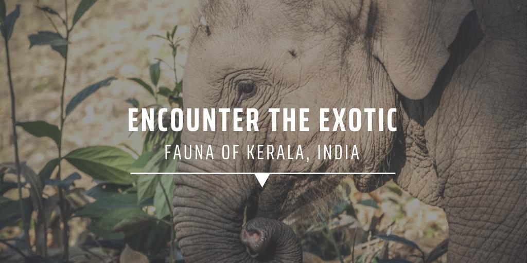 Encounter the exotic fauna of Kerala, India