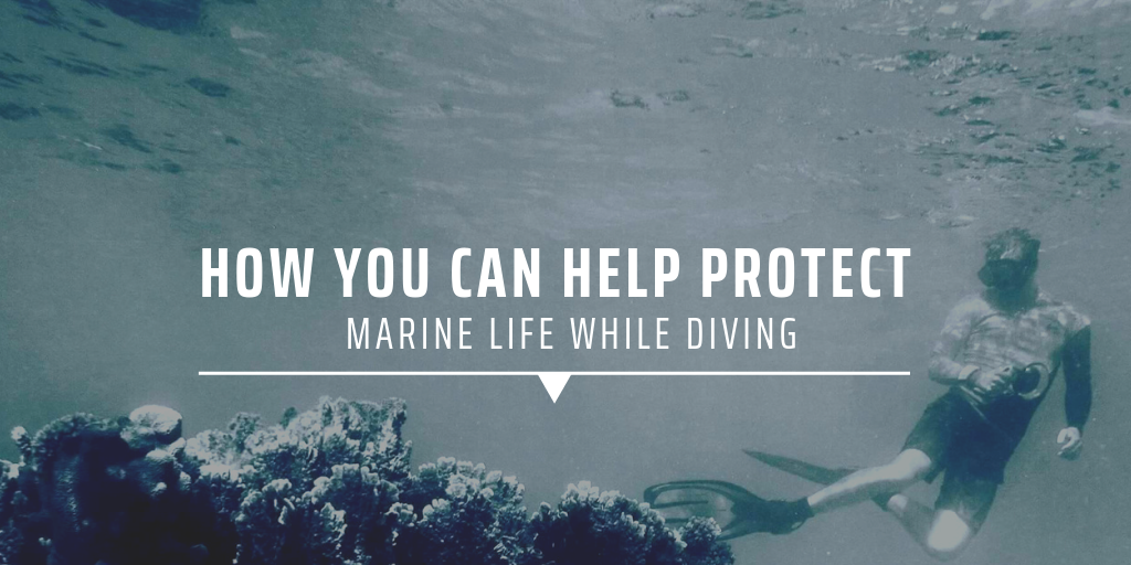 How you can help protect marine life while diving