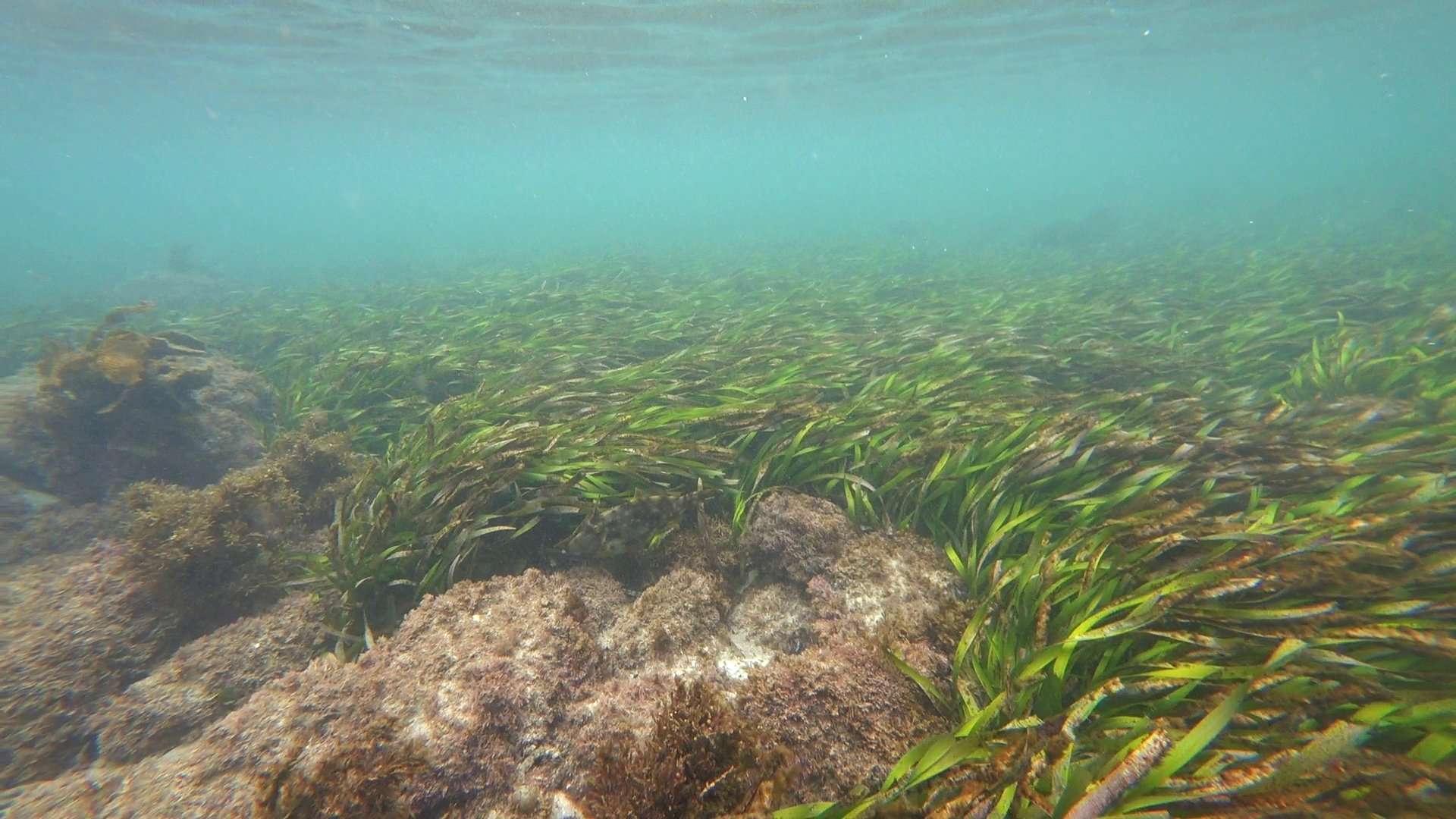 why is seagrass important