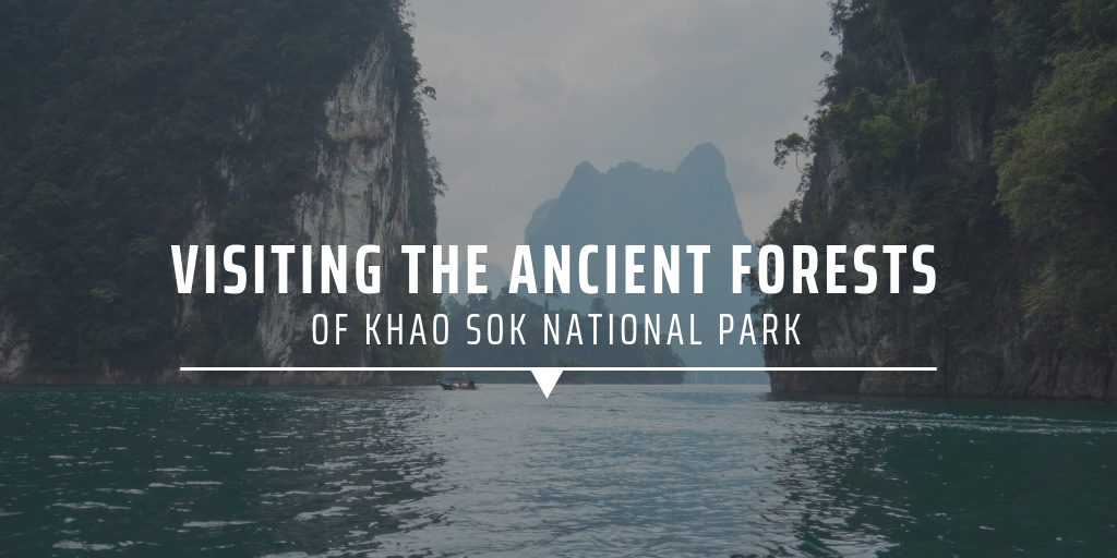 Visiting the ancient forests of Khao Sok National Park