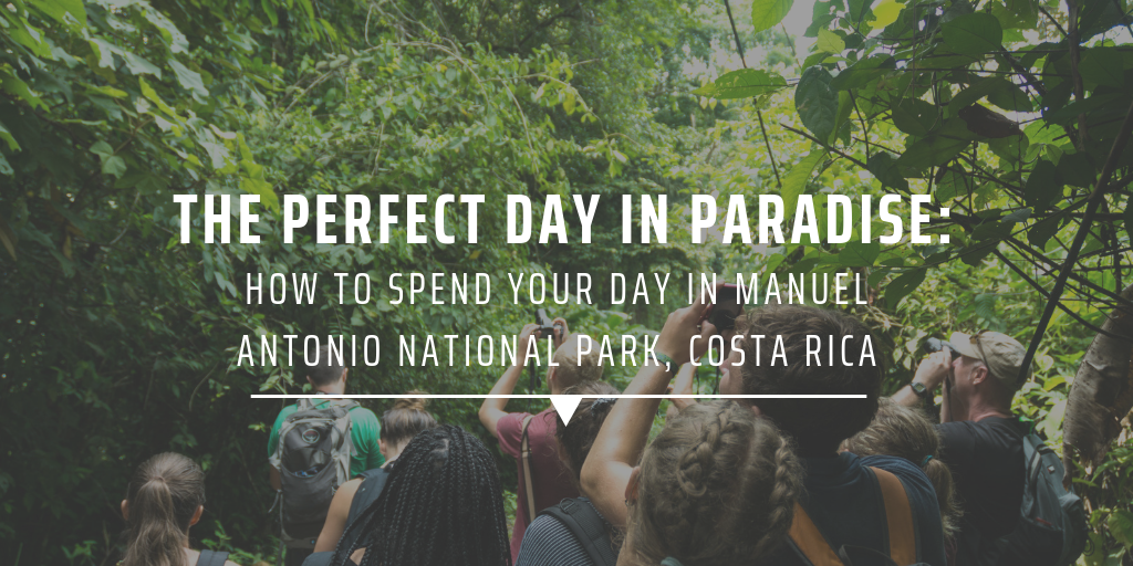 The perfect day in paradise: How to spend your day in Manuel Antonio National Park, Costa Rica