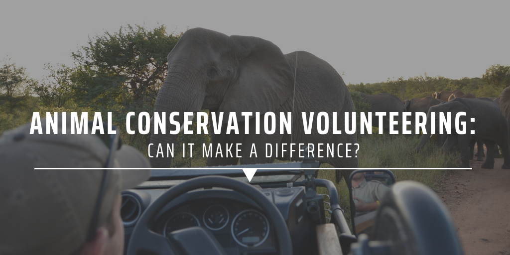 Animal conservation volunteering: Can it make a difference?