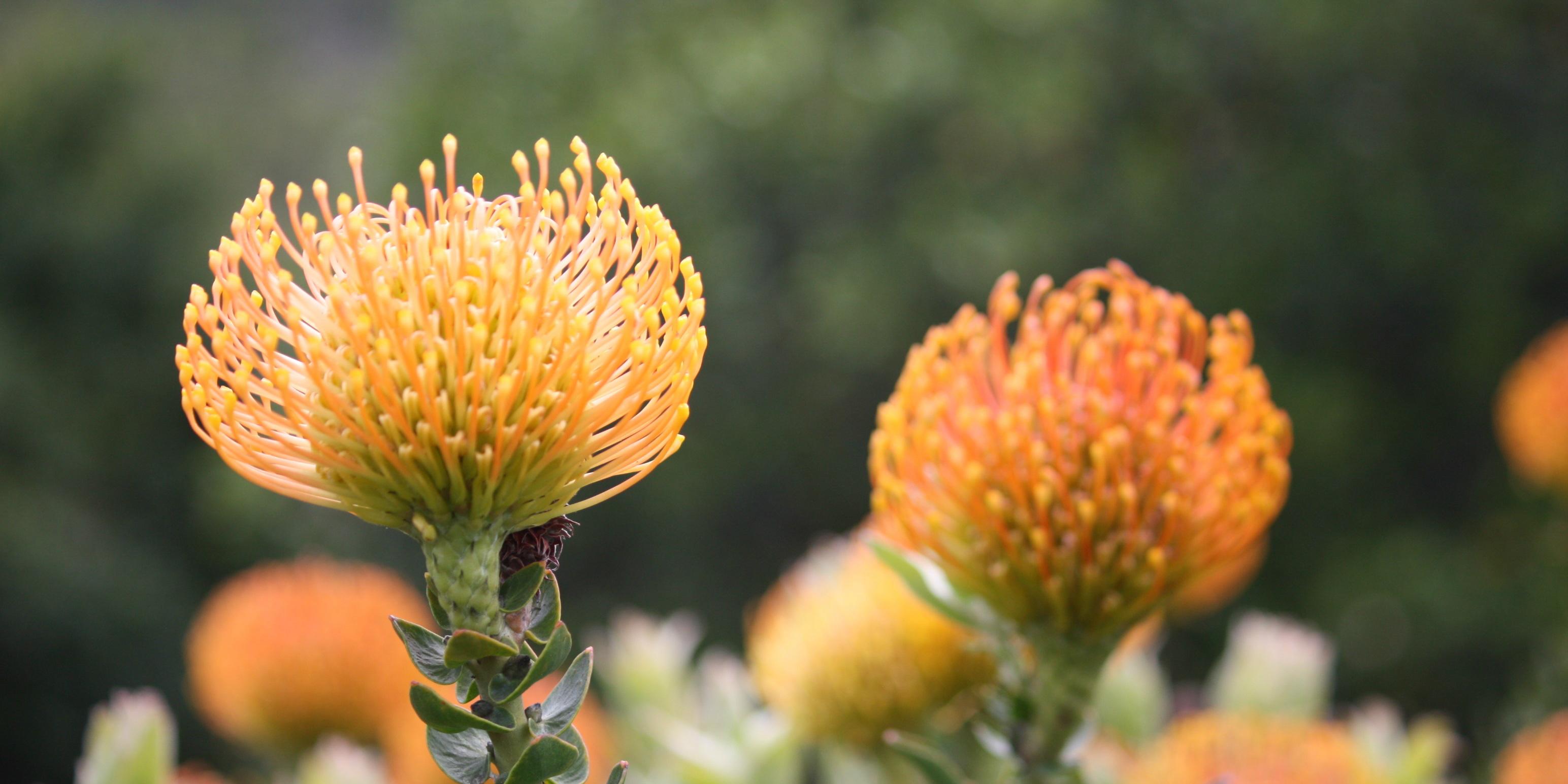 Cape town botanical gardens cape town
