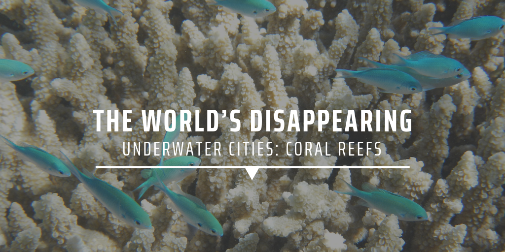 The world's disappearing underwater cities: coral reefs