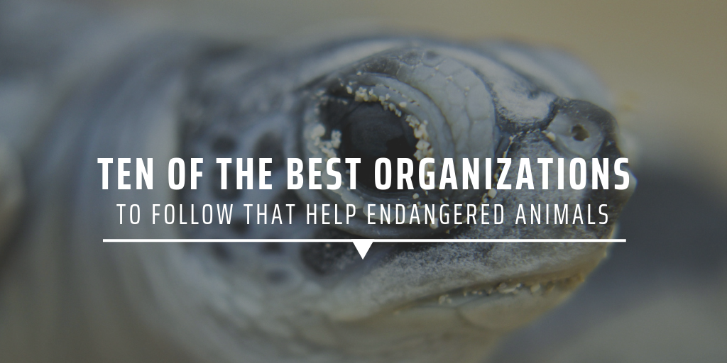 ten of the best organisations to follow that help endangered animals