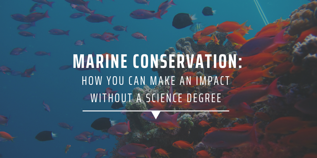 Marine conservation: How you can make an impact without a science degree