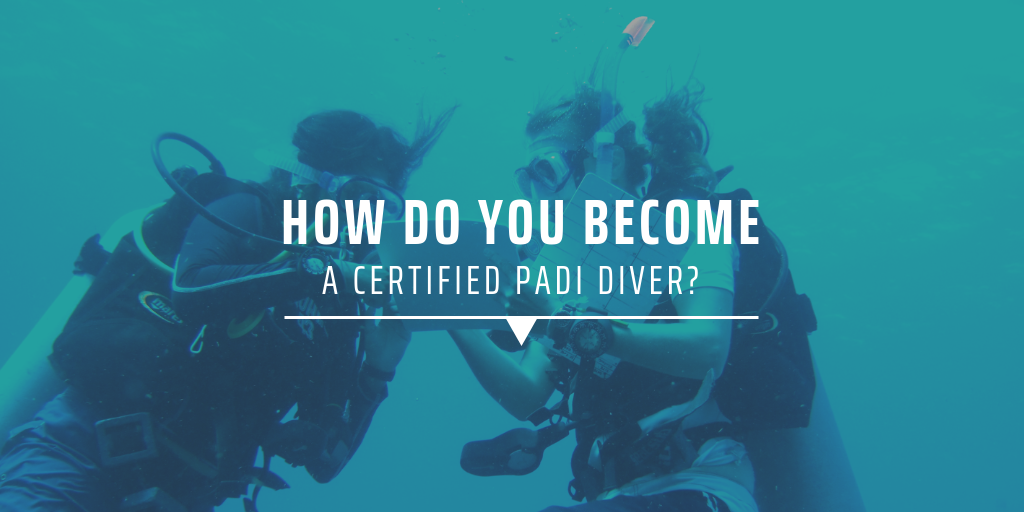 How do you become a certified PADI diver?