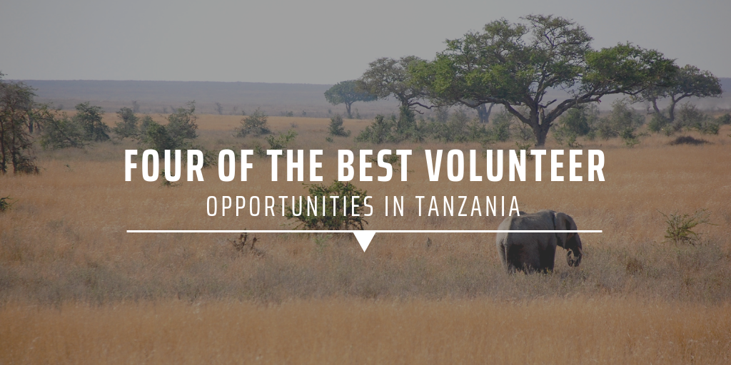 Four of the best volunteer opportunities in Tanzania