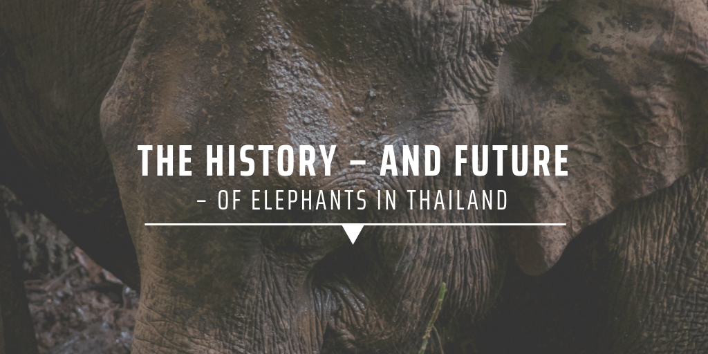 The history – and future – of elephants in Thailand