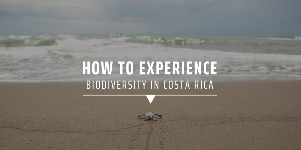 How to experience biodiversity in Costa Rica