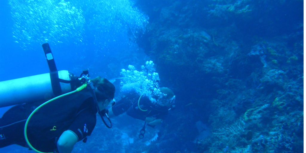 Puerto Morelos diving is the perfect change to see the Mesoamercan Barrier Reef System