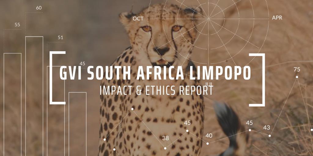Cheetah in Limpopo Savannah