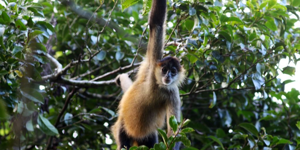 Jalova biodiversity surveys are always an adventure, monkeys are often seen swinging through the branches.