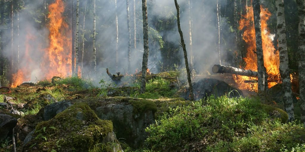 Abnormal weather and high temperatures are devastating large areas of forest around the globe.