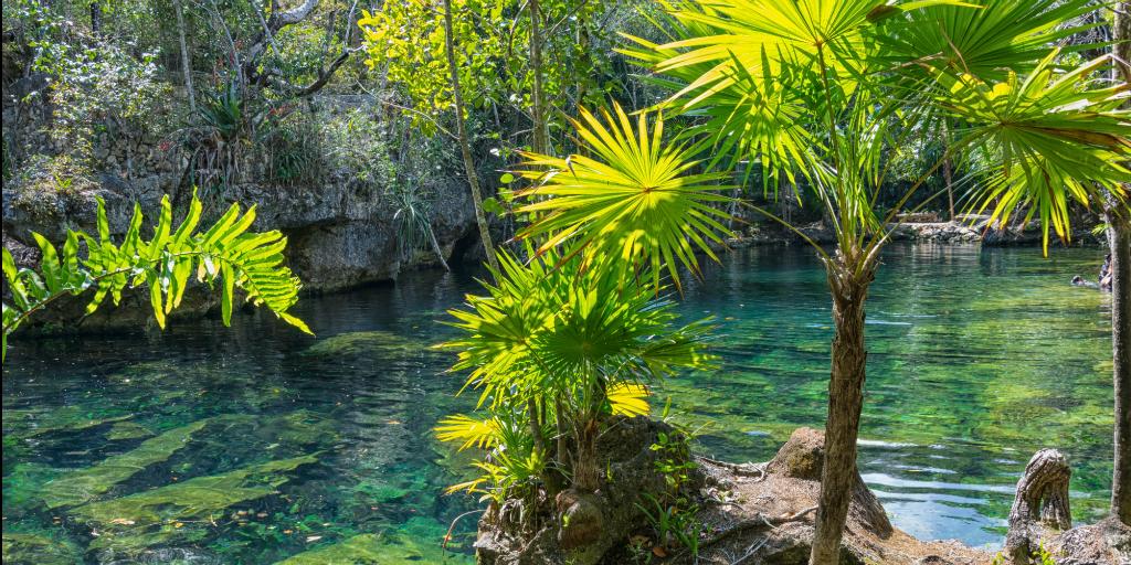 A Mexican cenote