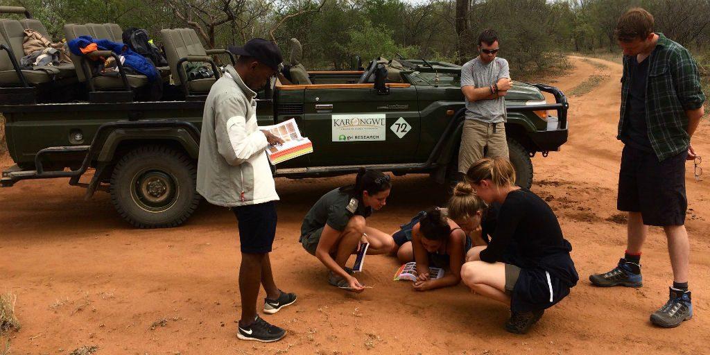 Volunteers on a wildlife conservation program