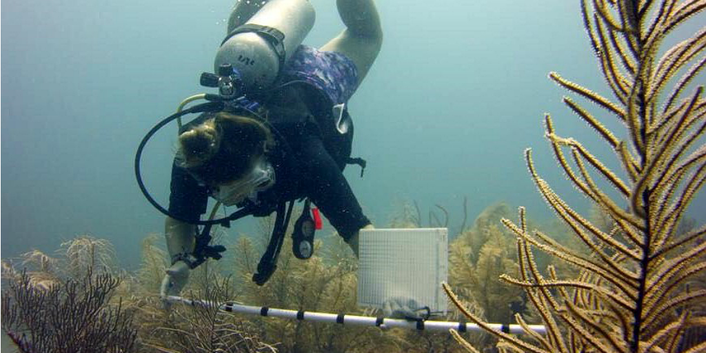 A diver taking the measurements of a sea plants as part of a survey.