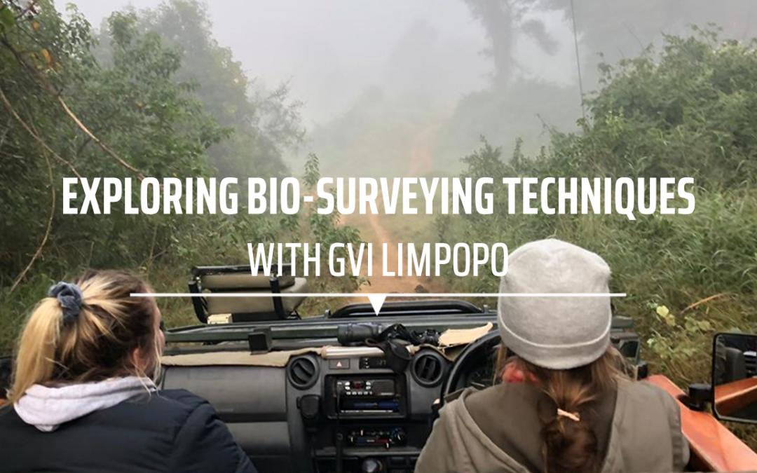 Exploring Bio-Surveying Techniques with GVI Limpopo