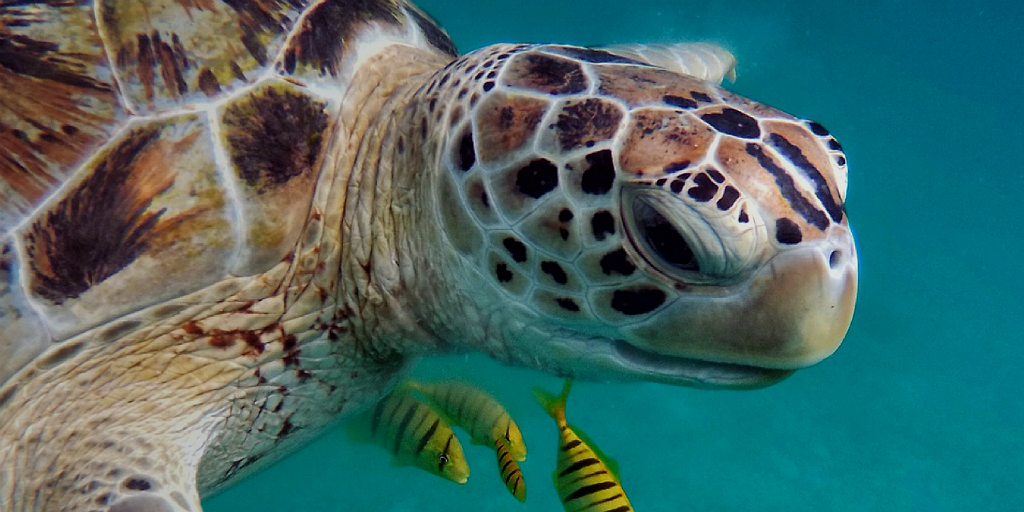 Join a GVI global digital open day and learn how to make an impact on sea turtle conservation.
