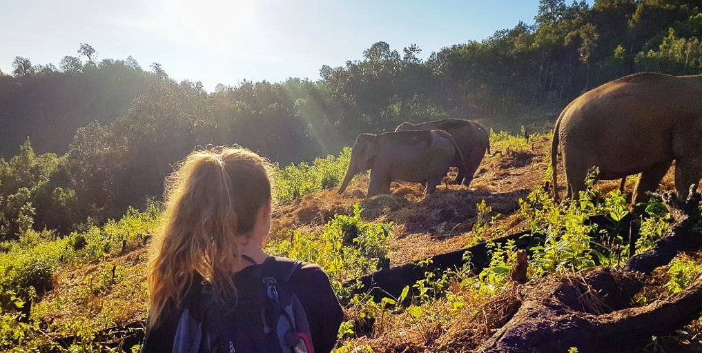 Participant observing Asian elephants and their behaviour in Chiang Mai