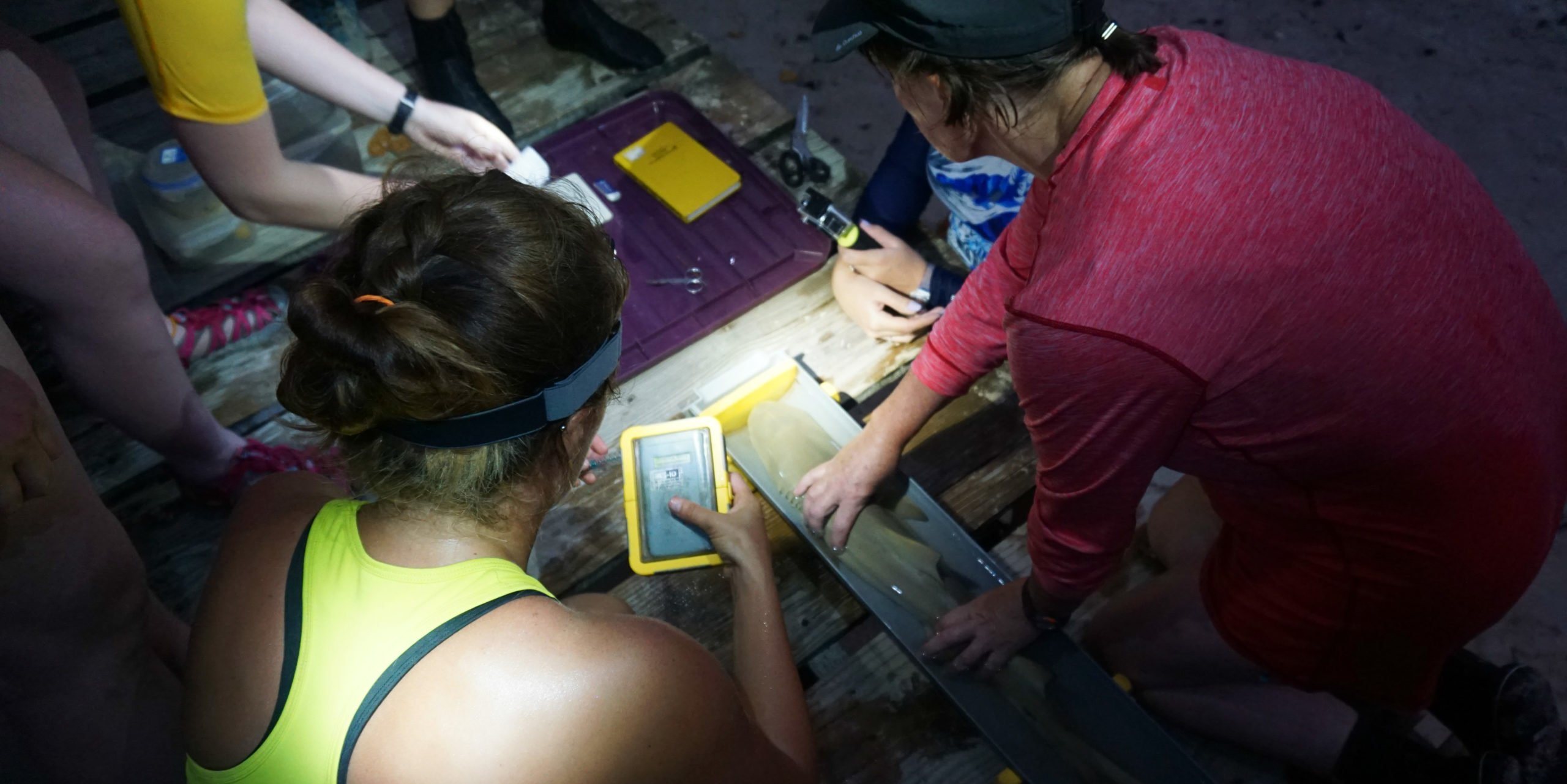 Participants and staff carefully collect data on a sicklefin lemon shark on a gap year program in Seychelles.