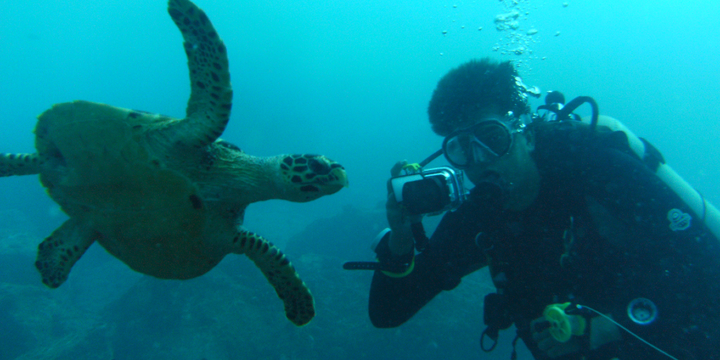 A GVI volunteer swims with a turtle, while gaining conservation work experience.