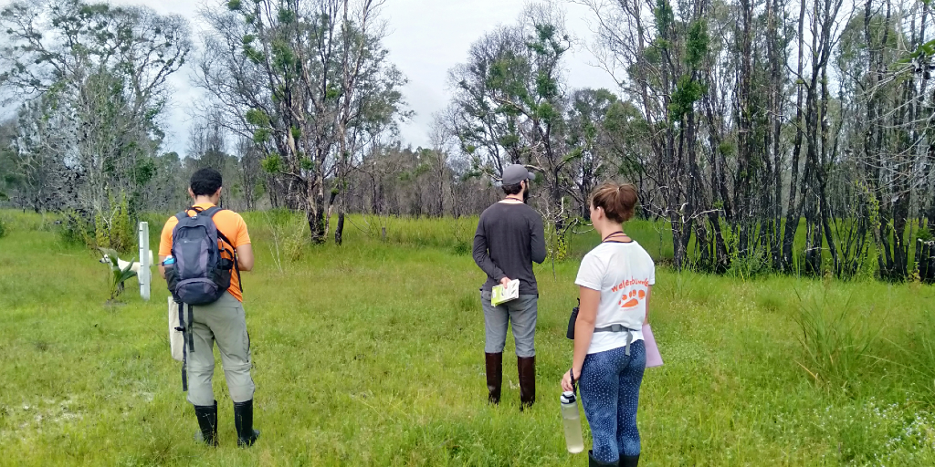The GVI volunteers assess the environment during their conservation internship.