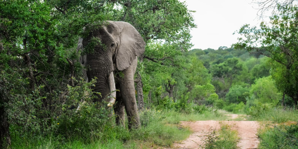 An elephant hides behind the trees.