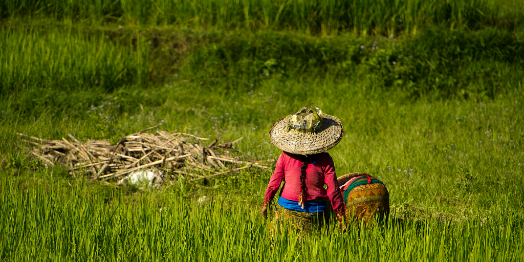 Ladies are busy in a grass field.