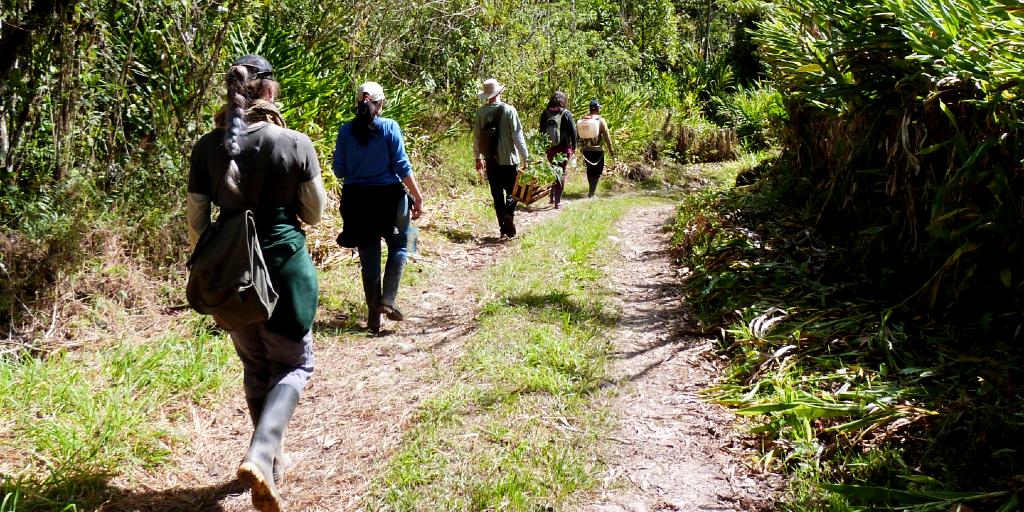 GVI volunteers take a walk during their volunteer abroad program.