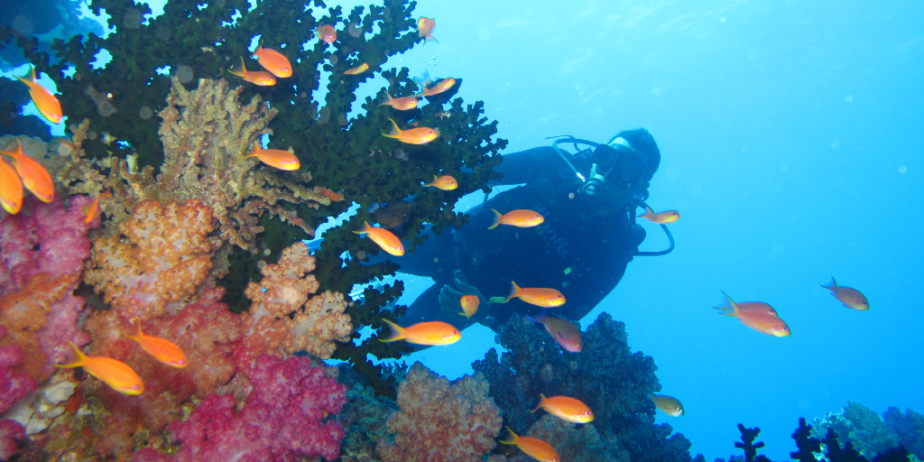 Support PADI Aware with marine conservation efforts.