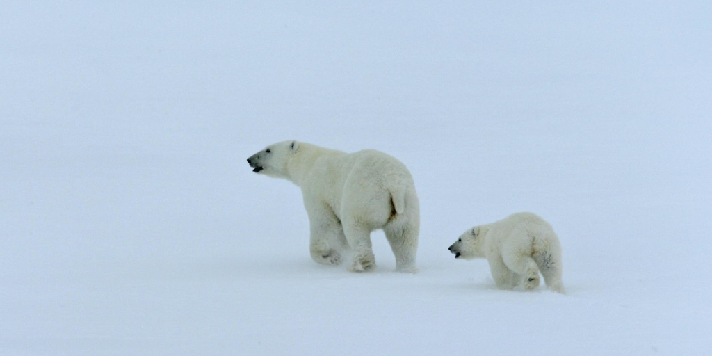 Support wildlife conservation in North America with Defenders of Wildlife.