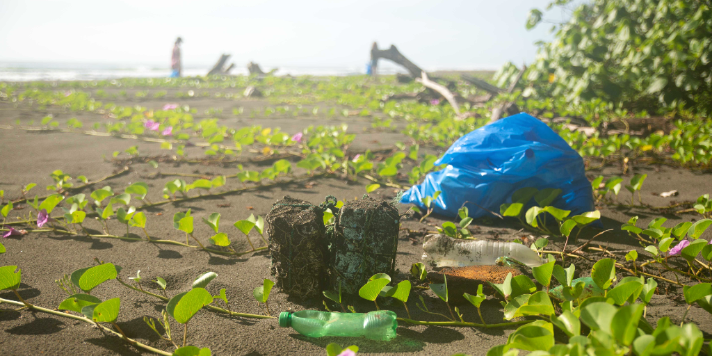 GVI participants can take part in beach cleanups.